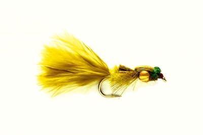 Golden Nugget Damsel